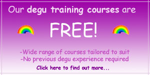 Degu Training Courses