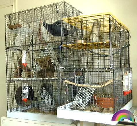 Degutopia's very first cages and modified cages